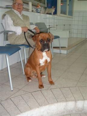 Boxer---Rollj-a-11-mesi-002