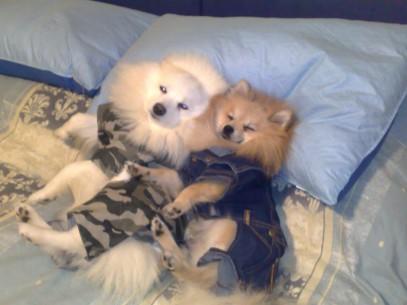 Leon  e Lollo (1)