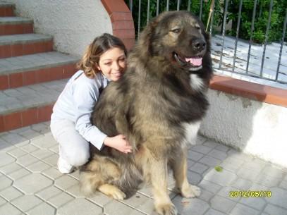 Pastore del Caucaso