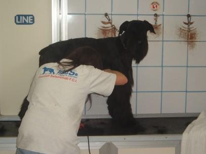 Righel a 11 mesi in toiletta  001