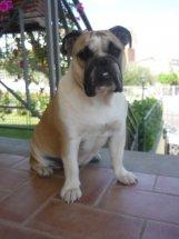 Trudy a 2 anni (4)