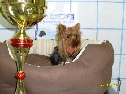 LADY CAMPIONESSA DI BELLEZZA (1)