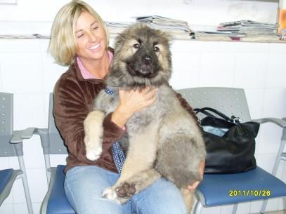 Baka a 4 mesi Pastore del Caucaso con la padroncina  407x305 Baka a  4 mesi Pastore del Caucaso con la padroncina