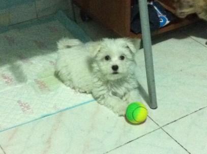 Lilly con pallina