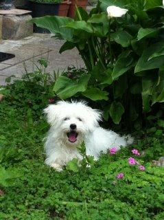 Lilly a 9 mesi in giardino