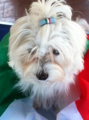 Nina Forza Italia  oto