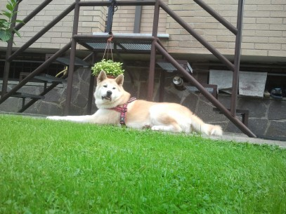 Chanel in giardino