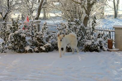 Yuki sulla neve  _o