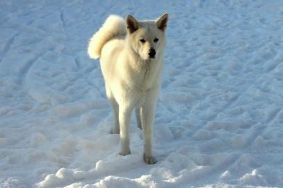 Yuki sulla neve da solo _o