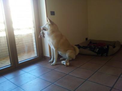 Chanel alla finestra con giocattolo
