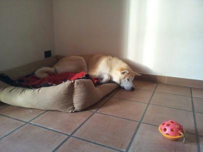 Chanel che dorme