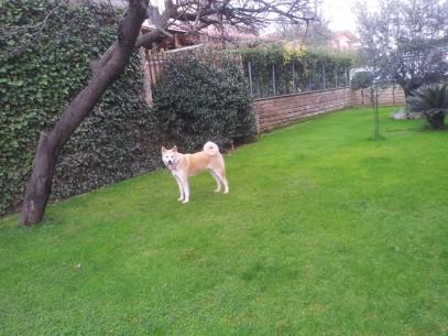 Chanel in giardino in posizione