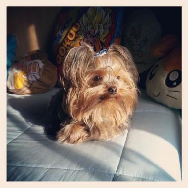 Sasha  a 2 anni