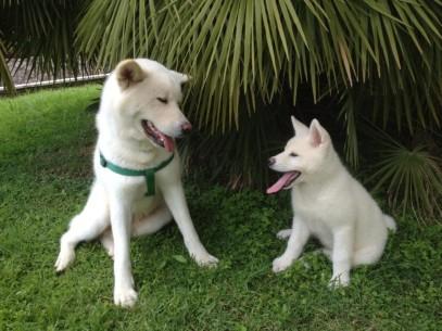 Yuki e Akira insieme sotto una palma !n
