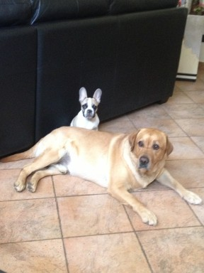 Bruno con il suo fratellone !!!