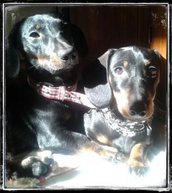 Gus e Viola .. per sempre (2)