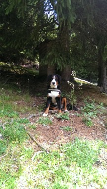 Lara nel bosco