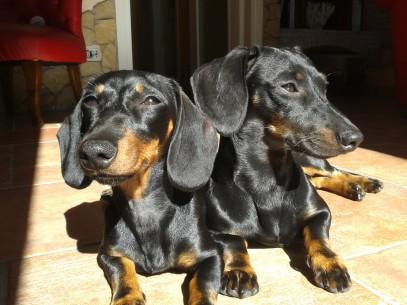 Gus e Viola al sole