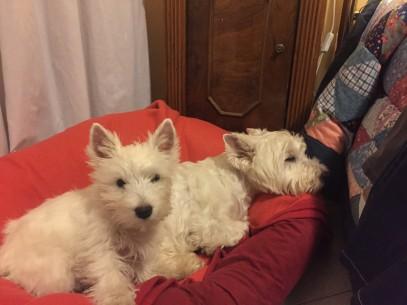 Sally e Snoopy (3)