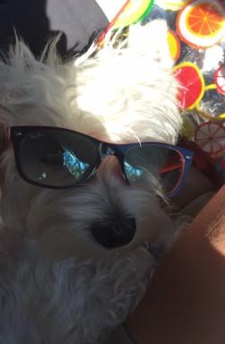 Snoopy con occhiali