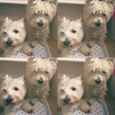Snoopy e Sally